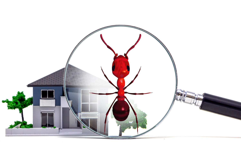 Diagnostic Termites en Ile de France : SPQR Diagnostics immobiliers